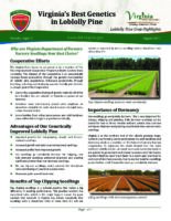 Virginia's Best Genetics in Loblolly Pine - Loblolly Pine Crop Highlights