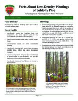 Facts About Low-Density Plantings of Loblolly Pine - Advantages of Planting Fewer Trees Per Acre