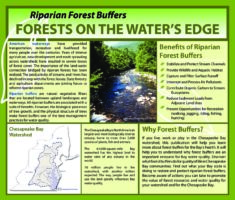 Riparian Forest Buffers - Forests on the Water's Edge