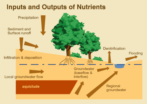 Illustration showing how trees process water and pollutants to basic elements for growth.
