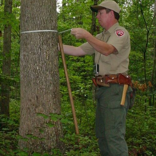Field Notes: Ground Truthing Forest Data