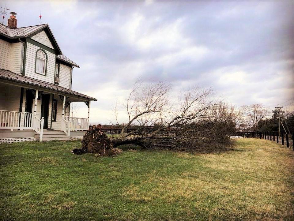 Kidwell Farmhouse fallen tree 2018