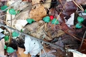Field Notes: What's in the Woods Today? Nov. 28, 2017